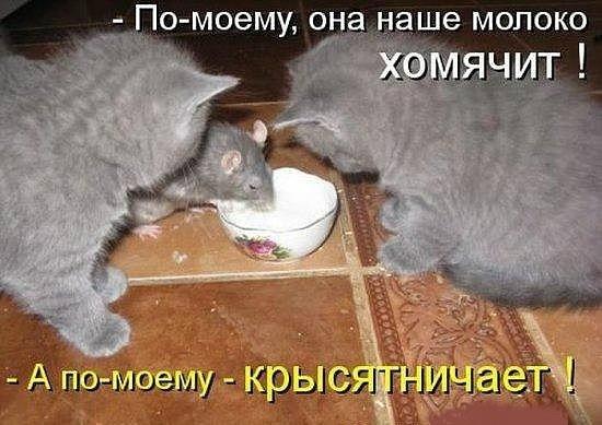 Смешные мышки картинки с надписями, фотографах картинках