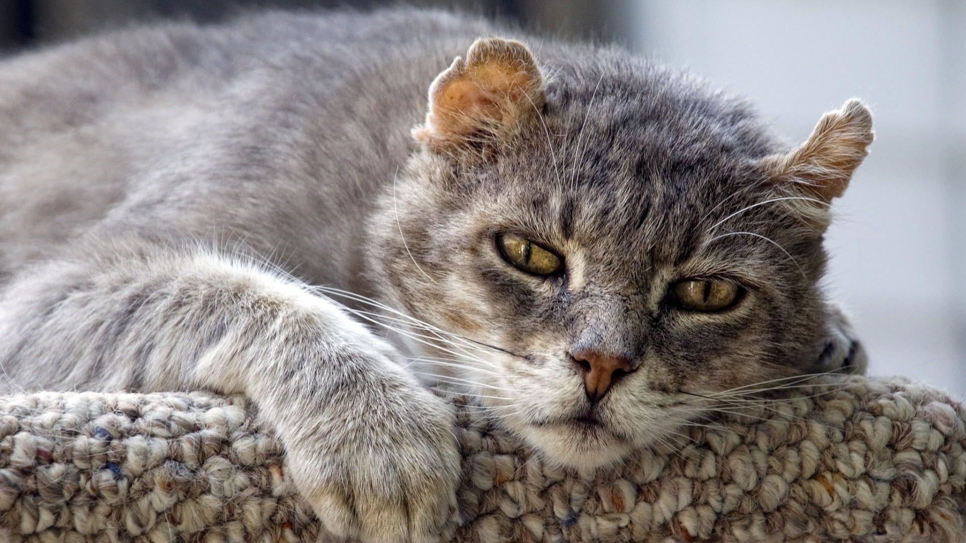 позволяет отличные картинки котов большинства покрыт