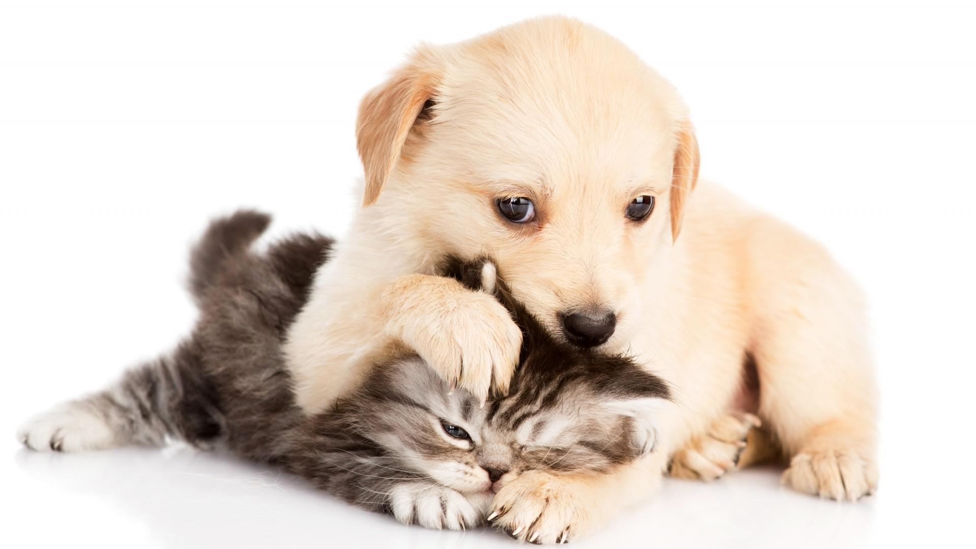 картинки на тему котята и щенята
