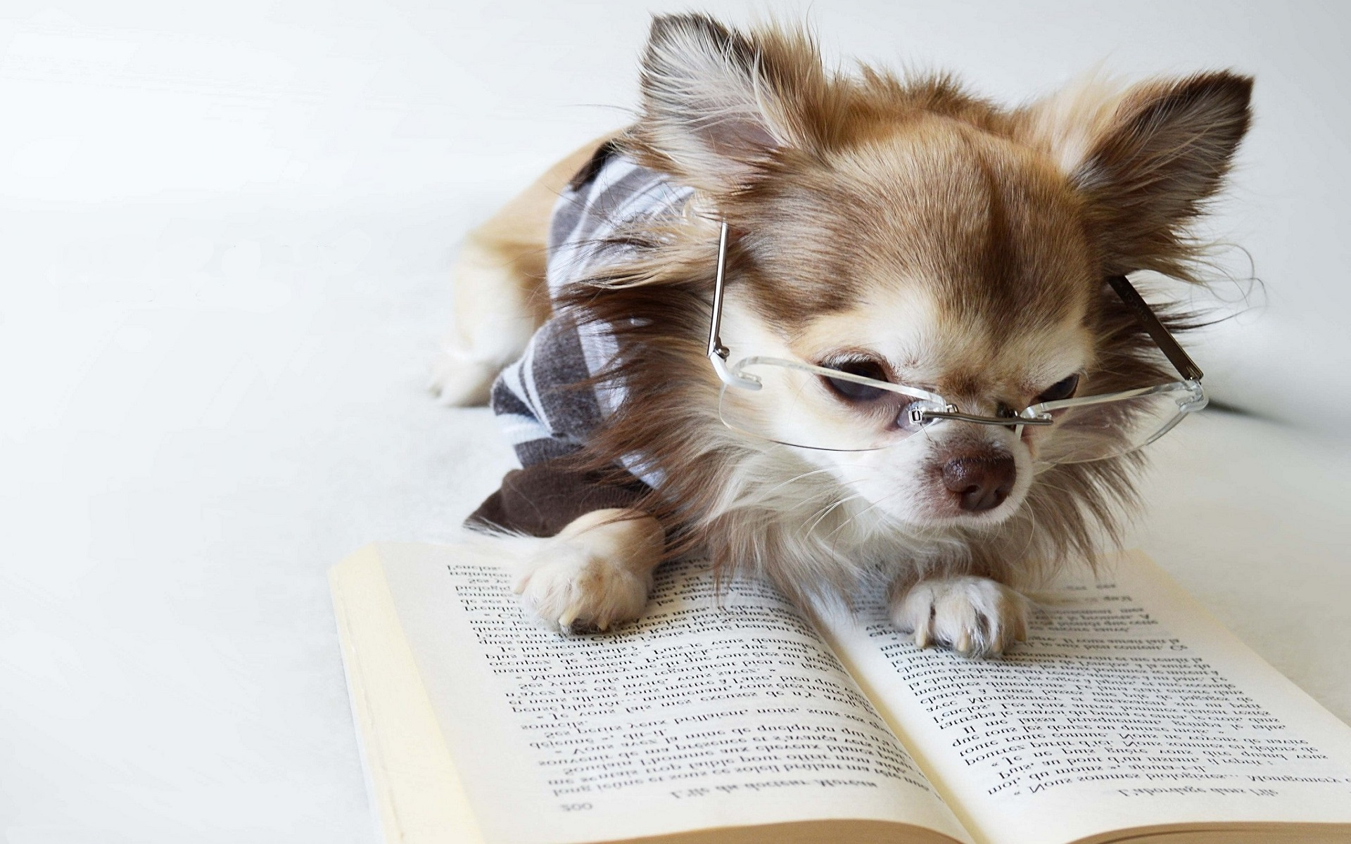 Картинка умной собаки