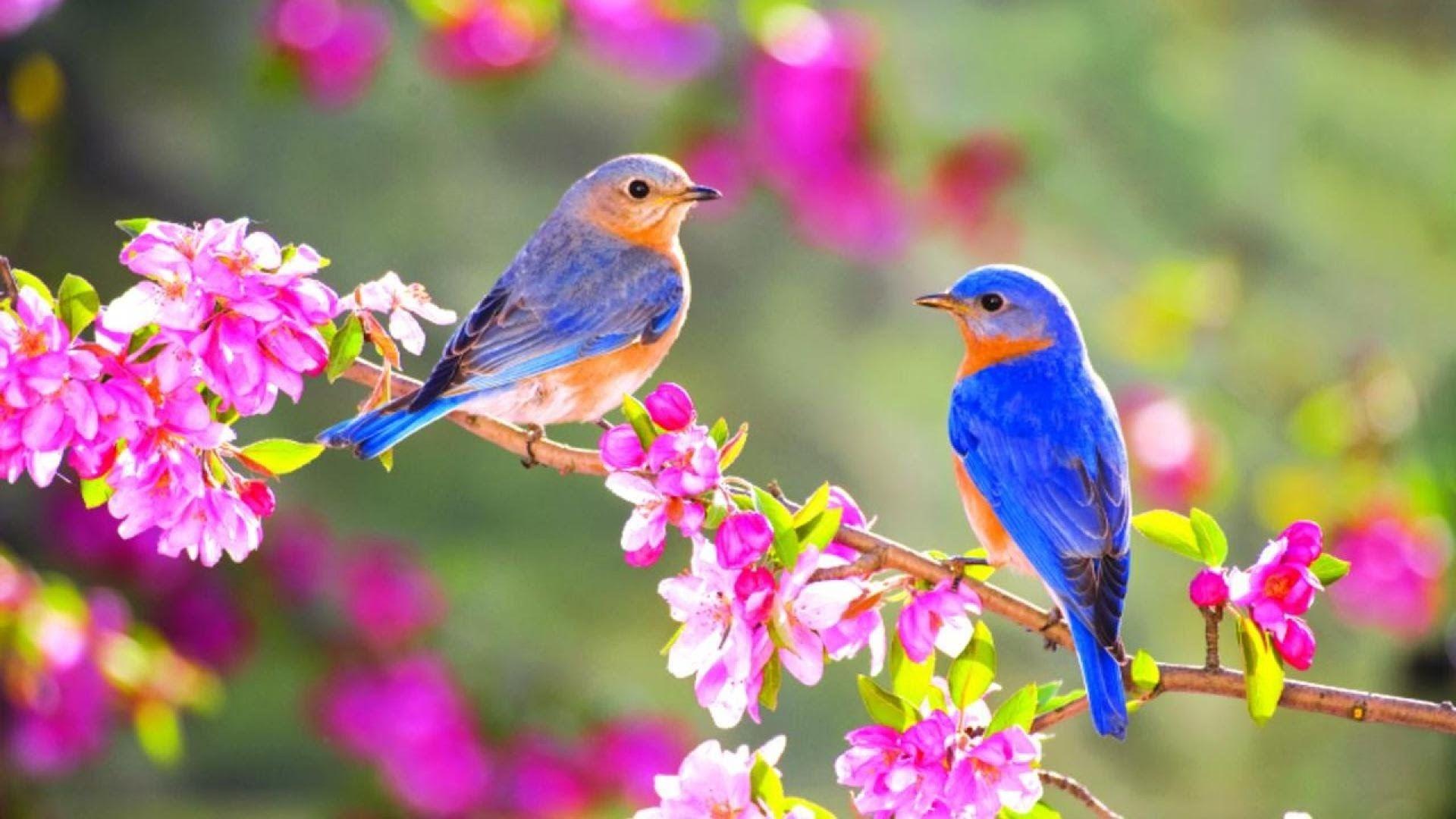 Обои на телефон птички
